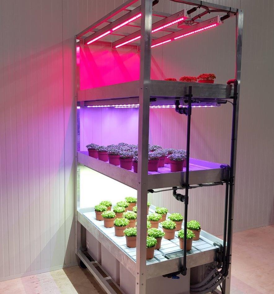 'Sow to Grow' in het teken van licht en kleur
