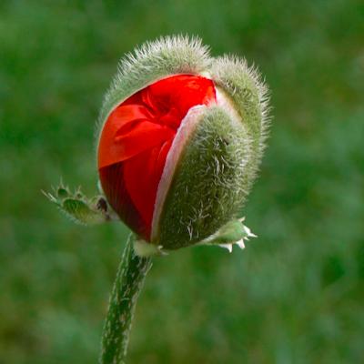 Cursus 'Kennismaking met Plantenveredeling' start weer op