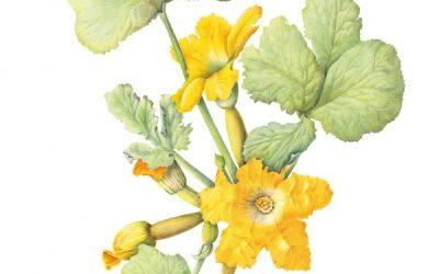De botanisch tekenaar is een pietje-precies